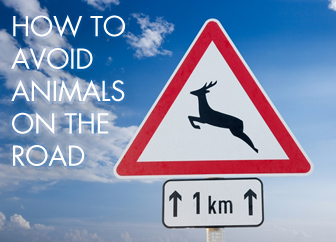 How to Avoid Animals on the Road